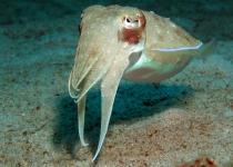 puerto-galera-photo-diving-1