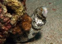 puerto-galera-photo-diving-11
