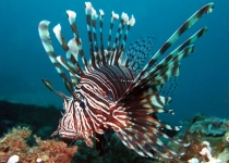 puerto-galera-photo-diving-12