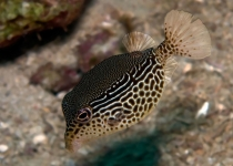 puerto-galera-photo-diving-3