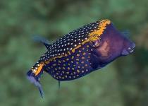 puerto-galera-photo-diving-5
