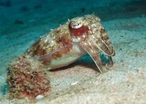 puerto-galera-photo-diving-6